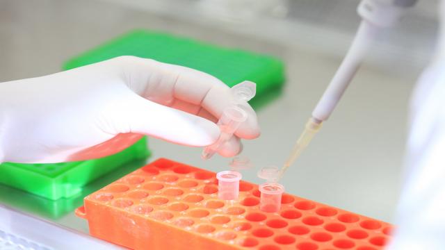 Em um ambiente laboratorial, uma mão de luvas usa uma pipeta para transferir um líquido para um pequeno reservatório